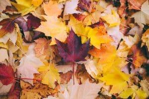 Autumn in Niagara