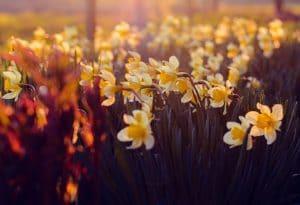 Spring in Niagara Falls featuring flower displays in Queen Victoria Park