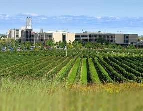 Niagara Falls Hotels Winery Tour