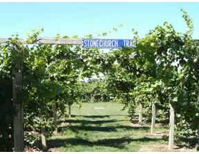 Niagara Winery - Stonechurch