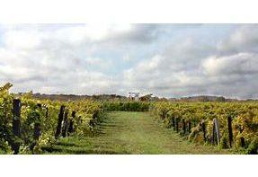 Niagara Winery - Daniel Lenko Wines